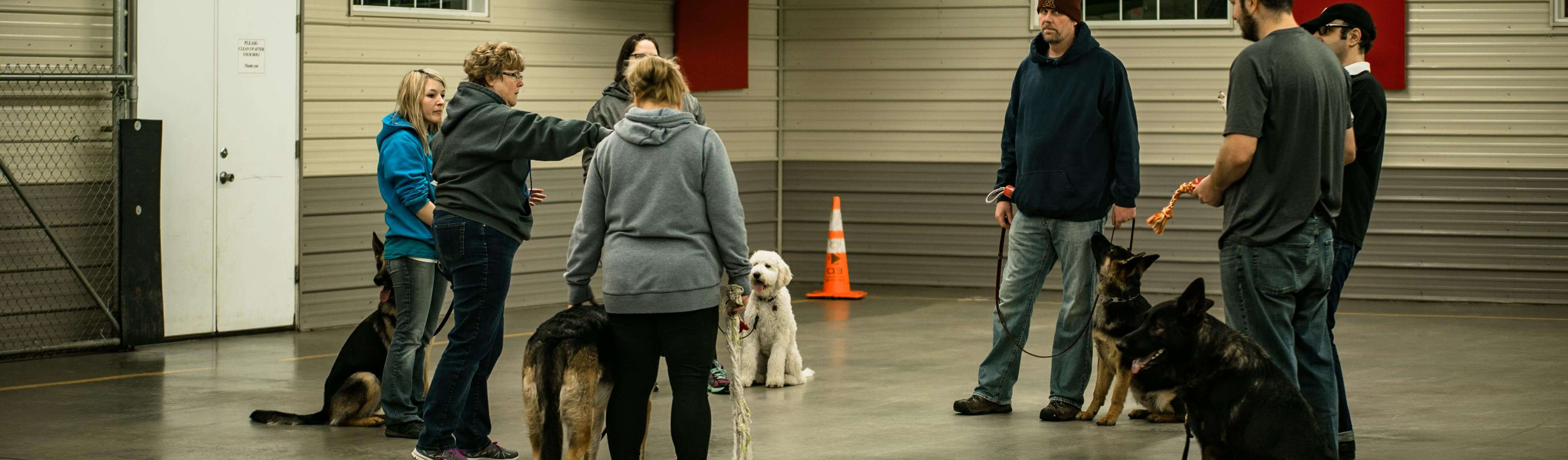 Dog Training | Sam & Danni's – St  Cloud, MN Area