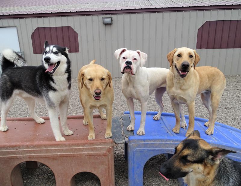 Dog Daycare   Sam & Danni's – St  Cloud, MN Area